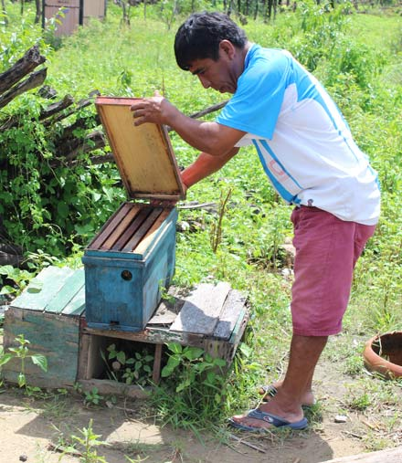 Teofilo Flores Chunga checks a beehive affected by the floods.