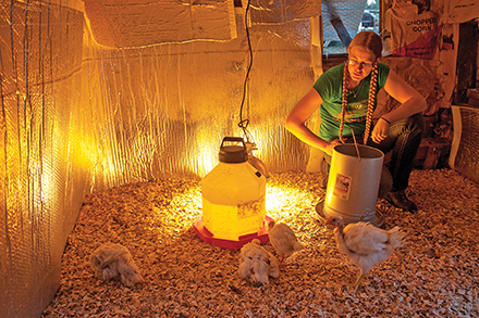 "In the ""chicken hospital,"" birds needing extra TLC can rest and stay warm."