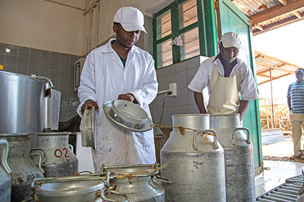 Workers check milk for freshness